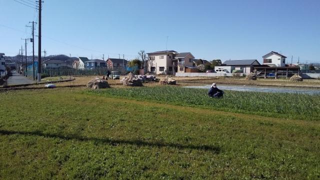 草むしりをするおじいさんと、田んぼで遊ぶ子どもたち