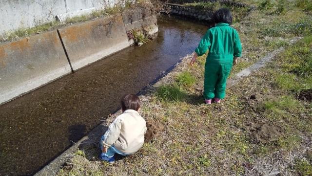 用水路に石ドボン遊び