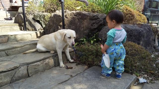 番犬と息子