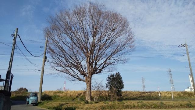 祠のある欅の大木とピアジオ