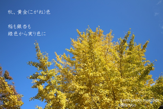 Earth photo message134秋色 3