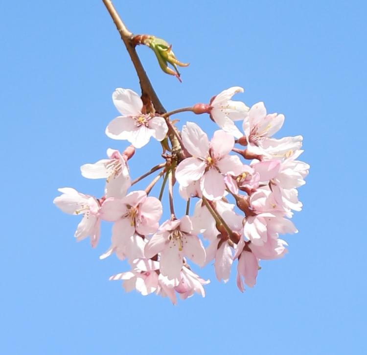 凛桜*Rio