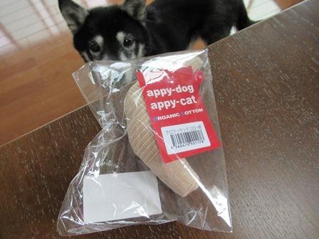appy-dog (1)