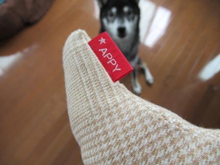 appy-dog (11)