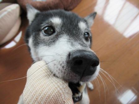 appy-dog (13)