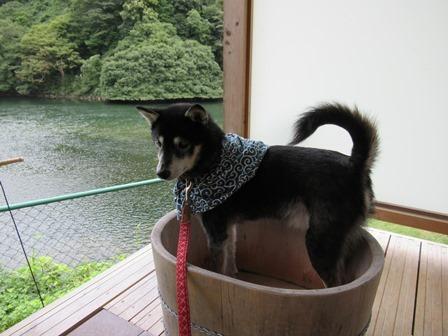 わんこあん露天風呂 (10)