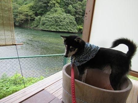 わんこあん露天風呂 (11)