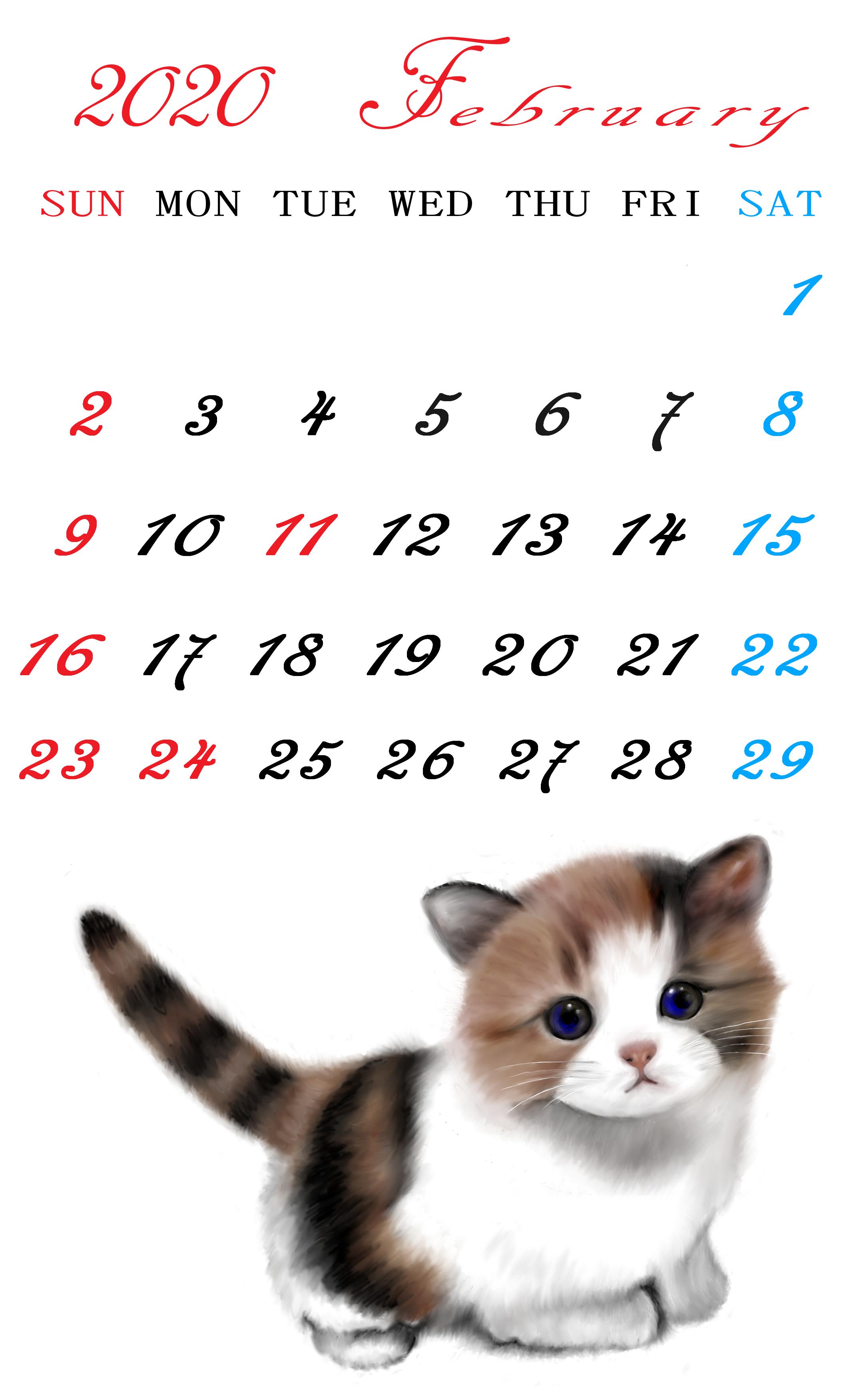2020猫2月1日