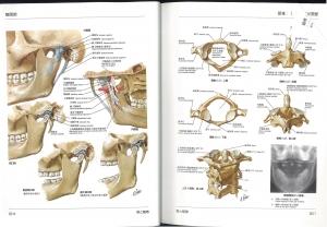 ネッター解剖学1
