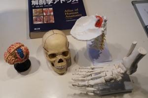 人体模型2