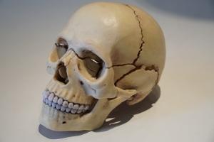 頭蓋骨外部
