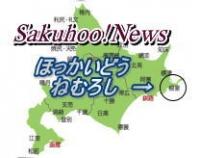 sakuhoo社