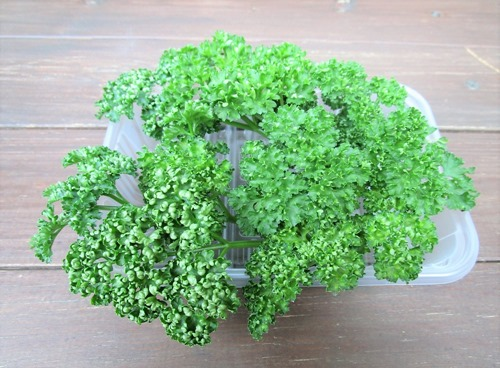 200127parsley2