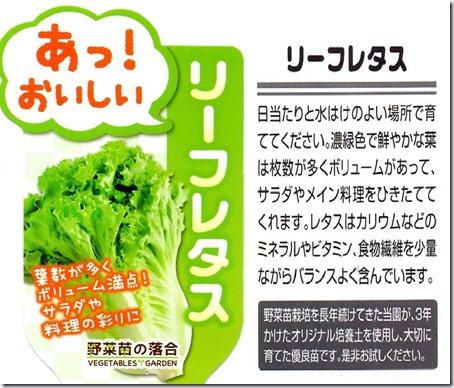 200227leaf_lettuce_nae2