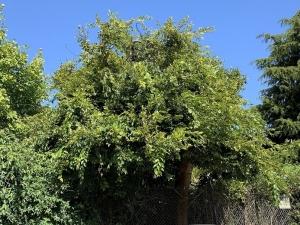 SF_Tree_MG_0021.jpg