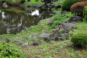Mii The Cat and Grey Heron