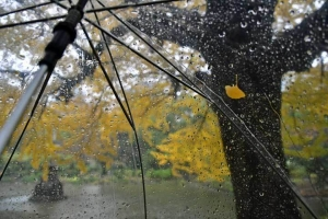 Autumn in The Rain
