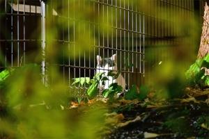 電源設備のフェンスの中にいる猫