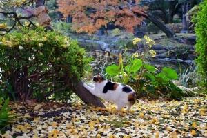 さくらちゃん Sakura-chan The Cat