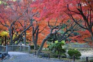 Autumn in December