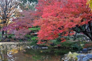 Autumn in December, Tokyo