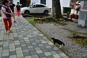Singapore Cat and Chinese tourists