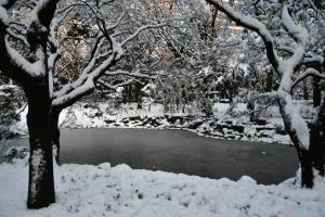 Snow Day Tokyo