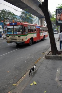 Cat and Bangkok Bus No.16