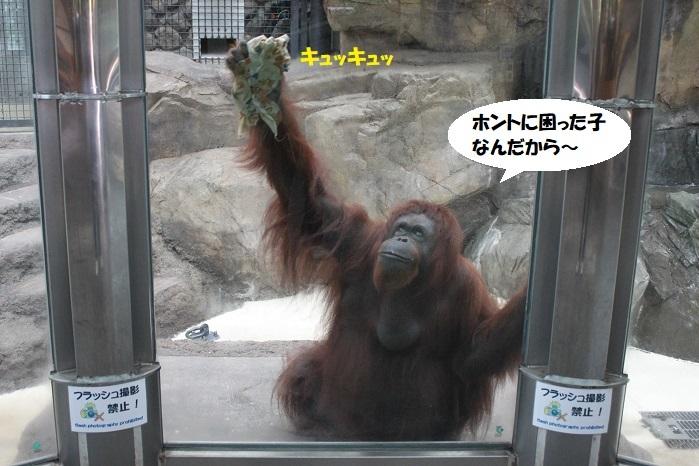 102 - コピー (2)