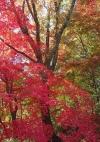 191123神戸市立森林植物園