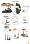 MushroomsOfBratinVol2-2.jpg