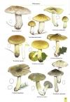 MushroomsOfBratinVol2-3.jpg