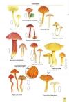 MushroomsOfBratinVol2-4.jpg
