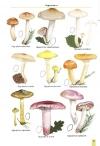 MushroomsOfBratinVol2-5.jpg