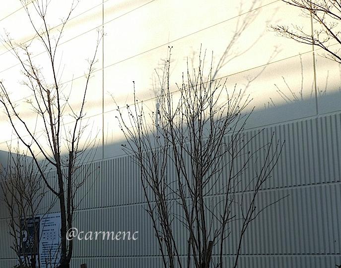 冬の日の樹