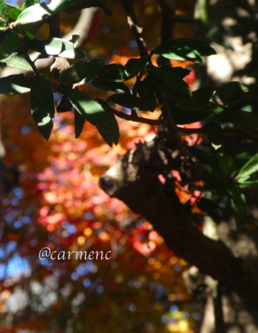 秋の日の某邸の庭