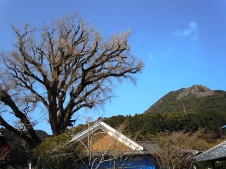 ②口屋番所3(2020-01-02)英山・大公孫樹