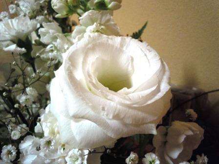 白い生花3( 2020-01-24)