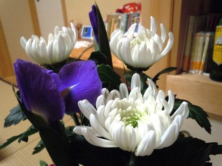 白菊生花6( 2020-01-24)