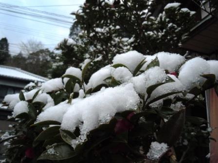雪景色8(2020-02-18)