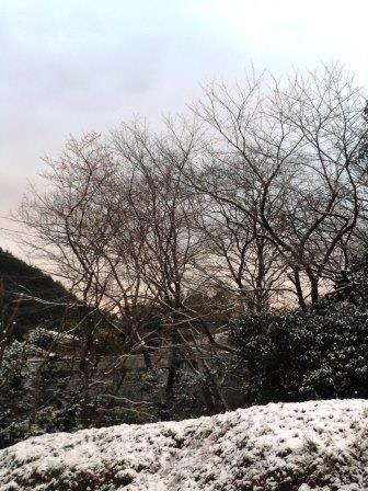 雪景色7(2020-02-18)タテ