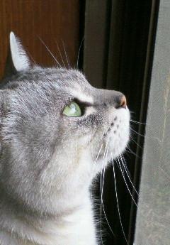 ごんちゃん1(2009-03-21)