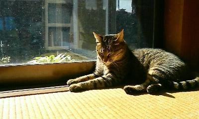 のんちゃんの日向ぼっこ