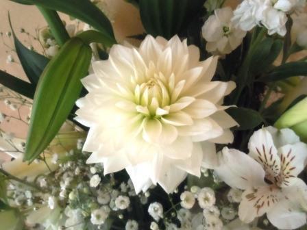 白い花2(2020-01-23)