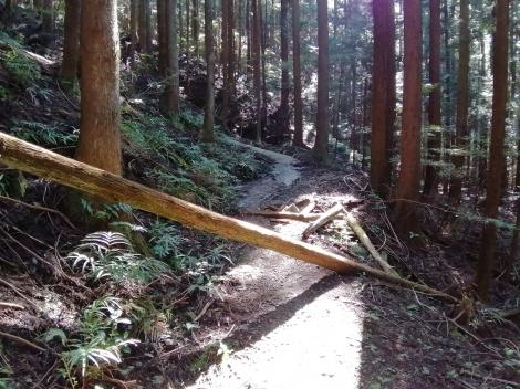 傘杉峠から関八州12