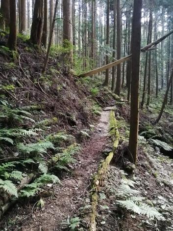 傘杉峠から関八州13