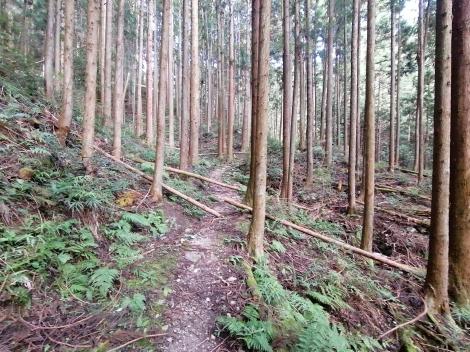 傘杉峠から関八州14