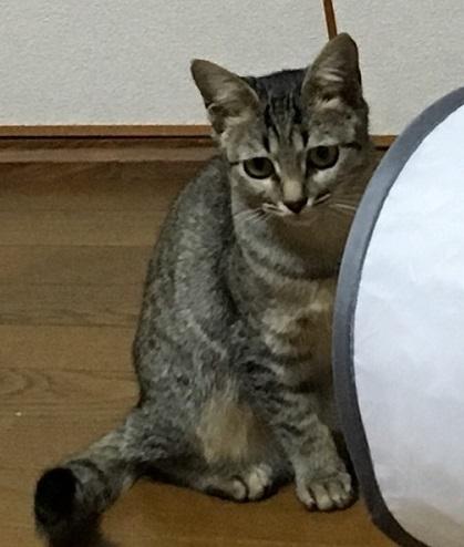 しお20191211a