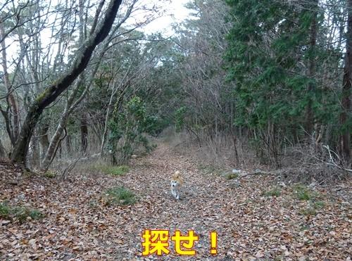 4里山散歩