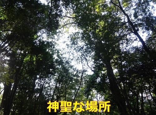 1緑に囲まれた神聖な場所